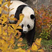 National Zoo Giant Pandas enjoy fall