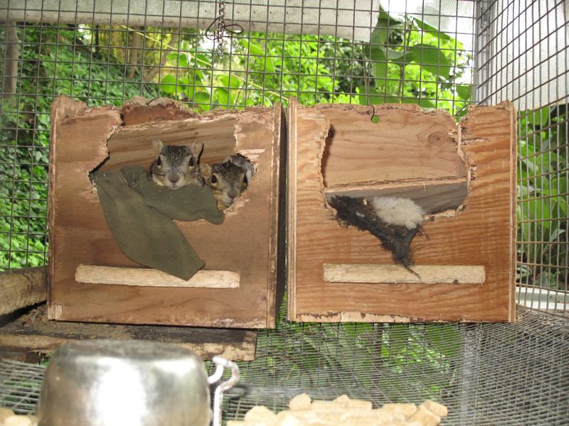 Destroyed Squirrel Houses Animal Advocates Mary Cummins
