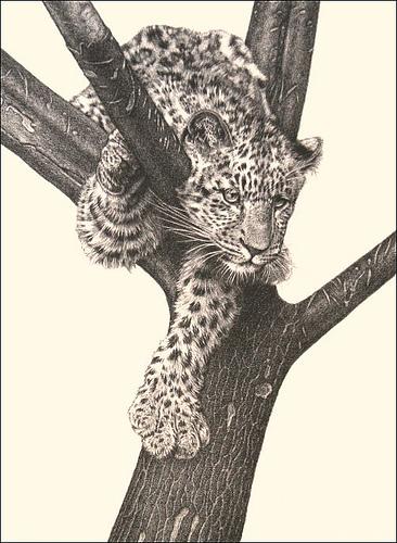 Leopard Pencil Drawings 'Curious Cub' - Leopar...