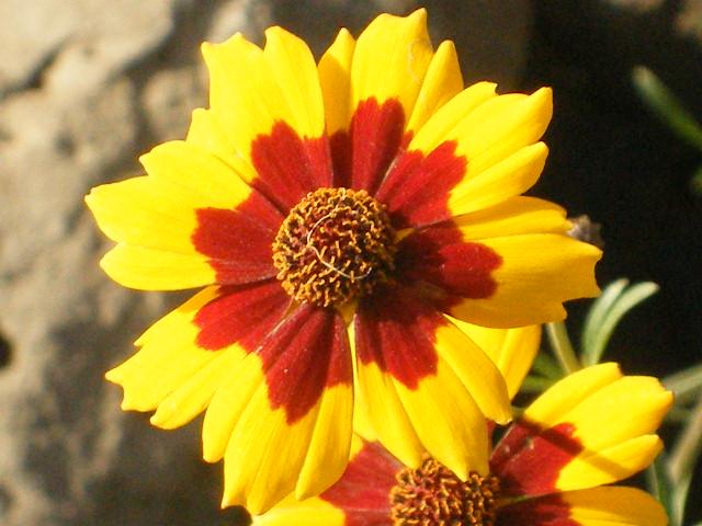 Yellow flower red center taken at vantage next to the colu flickr yellow flower red center by nightbird2007 mightylinksfo