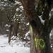 Trees 20425