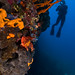 Diving in Korcula, Croatia