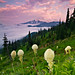 Beargrass Sunrise