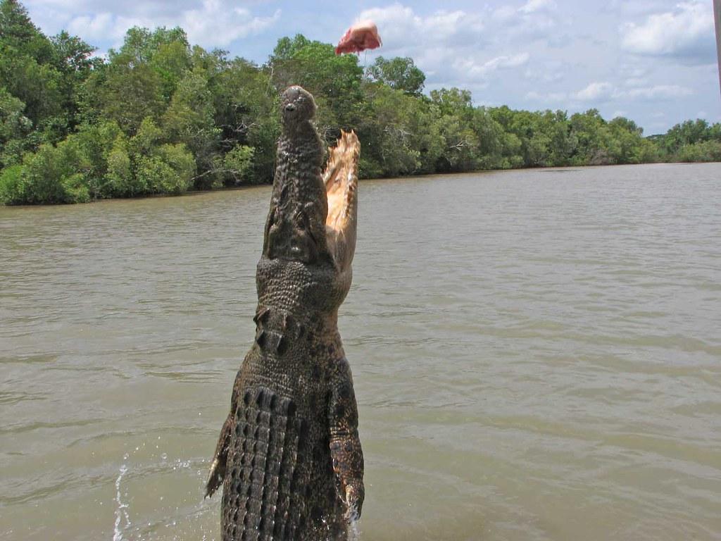 Salt Water Crocodile Coloring Page