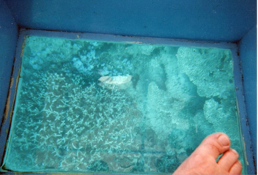 Glass Bottom Boat Tours West Palm Beach