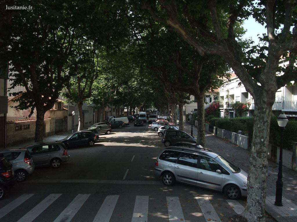 Rue arborée de Porto