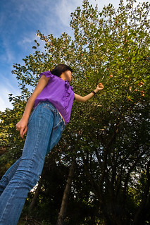 Apple Picking | by Benson Kua