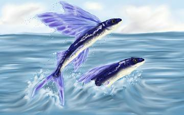 California flyingfish i organism common name for Flying fish name