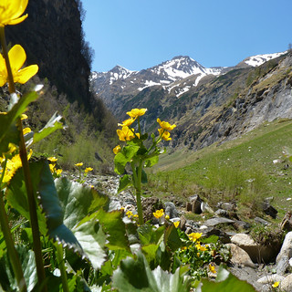Marigolds nested amid the magnificent Alpine mountains. | by B℮n