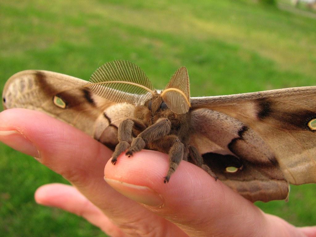 Kisses for Weird Aunt Martha | Polly sends you fuzzy moth ... 3d Doritos