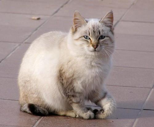 Cat front paw splint