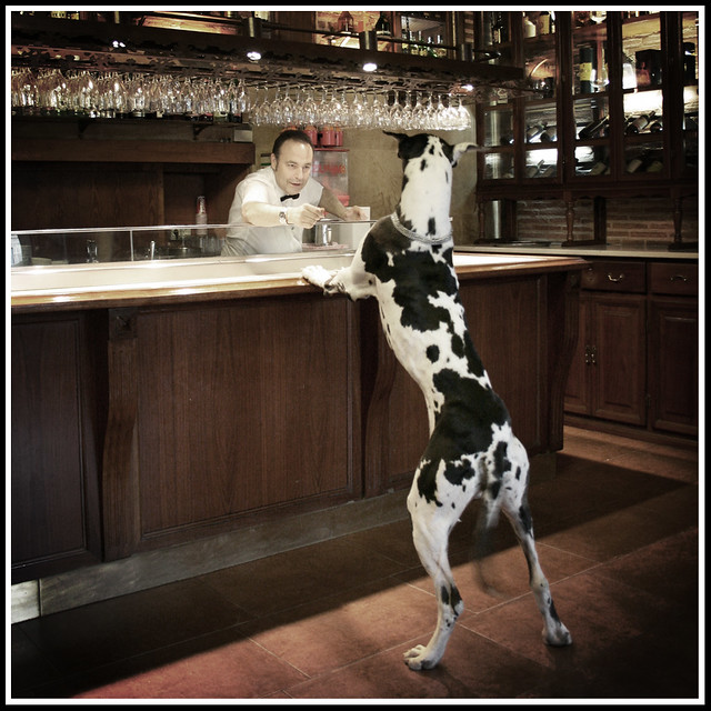 Image result for a dog walks into a bar