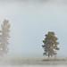 Dawn Fog #2, Yellowstone River, Yellowstone NP, Summer 2007