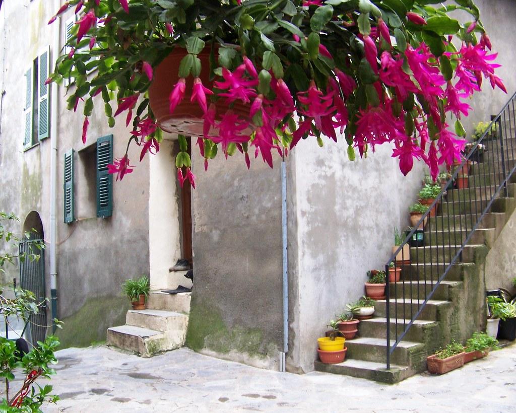 fleurs suspendues marie flickr. Black Bedroom Furniture Sets. Home Design Ideas