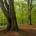 spring forest