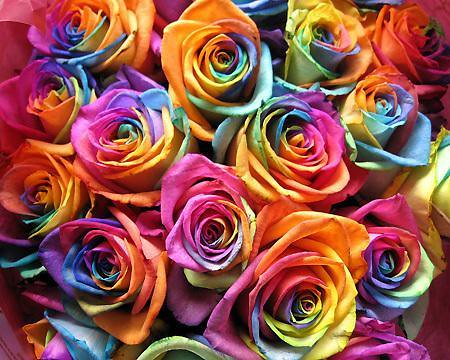 Multi colored roses how colorful and beautiful for How to make multi colored flowers