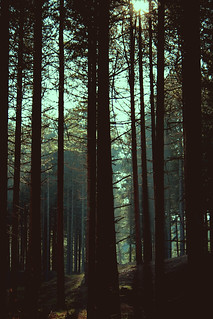Pinewoods | by g slater
