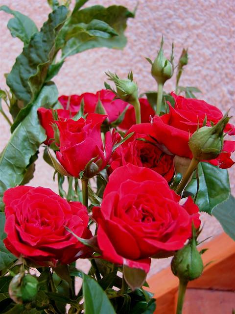 Photo for Un bouquet de roses