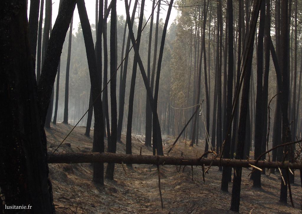 Les poteaux électriques du téléphone qui traversent la forêt sont mis à mal...