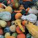 Amazing Gourds
