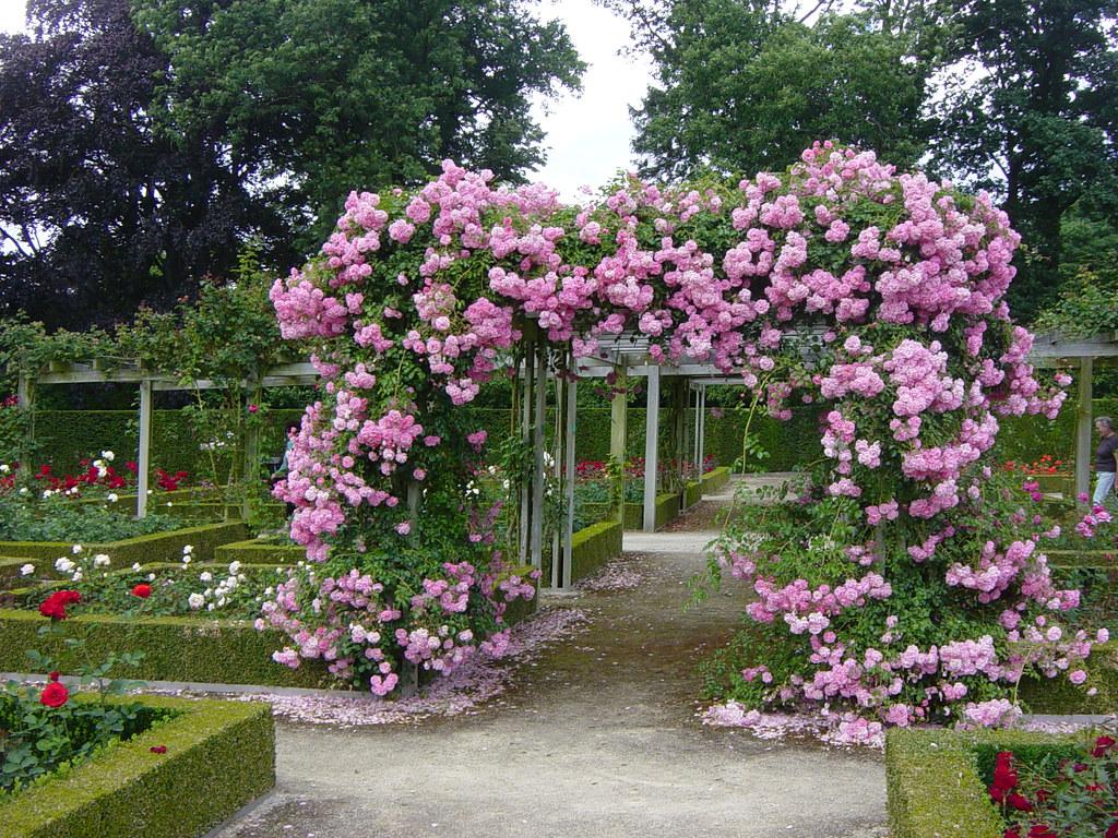 rose garden le jardin des roses le jardin des roses est flickr. Black Bedroom Furniture Sets. Home Design Ideas