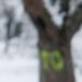 Trees 20292