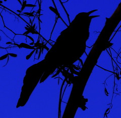 Bird silhouette | by kevin dooley