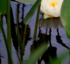 hidden in reflections