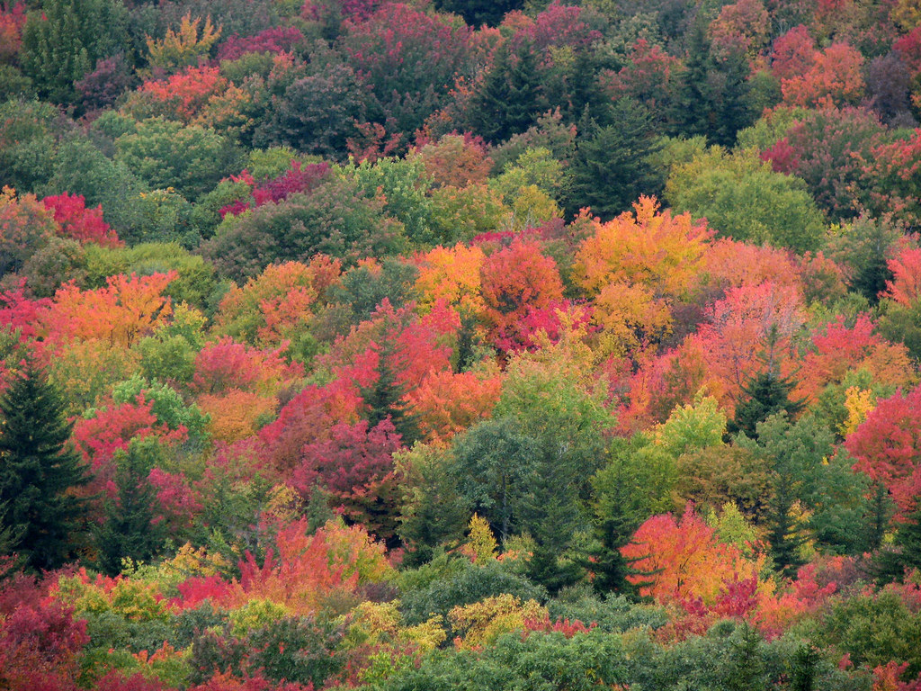 Trees can be show-offs, too. Check out this Fall foliage and join us for Arbor Day at your favorite Virginia State Park
