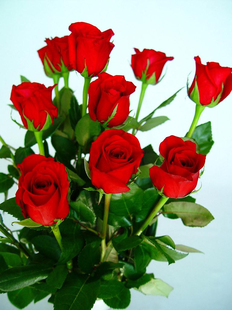 Flores de rosas rojas | El consumo de flores naturales en