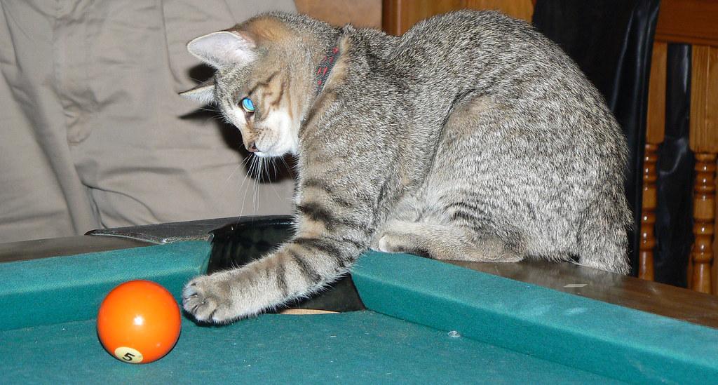 Read Cat Scratch Fever Tara K Harper Online Free