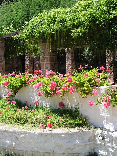 Jardines casona jard n bot nico nacional vi a del mar for Jardin botanico vina
