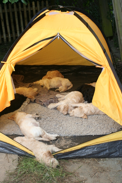 ... puppy tent   by Merry Meridian & puppy tent   Meredith Norlindh   Flickr