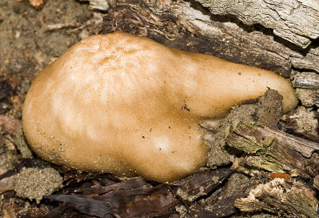 Brown slime fungus help needed in identifying this for White fungus on fish