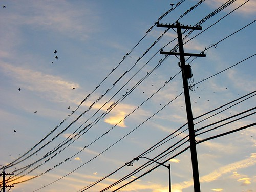 birds on a wire | by Anosmia
