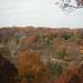 fall_trees_30