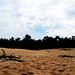Panoramic view over the Drunense Duinen