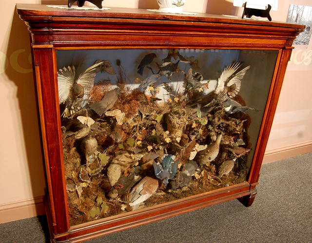 Victorian Taxidermy Bird Display A Case Cramped With