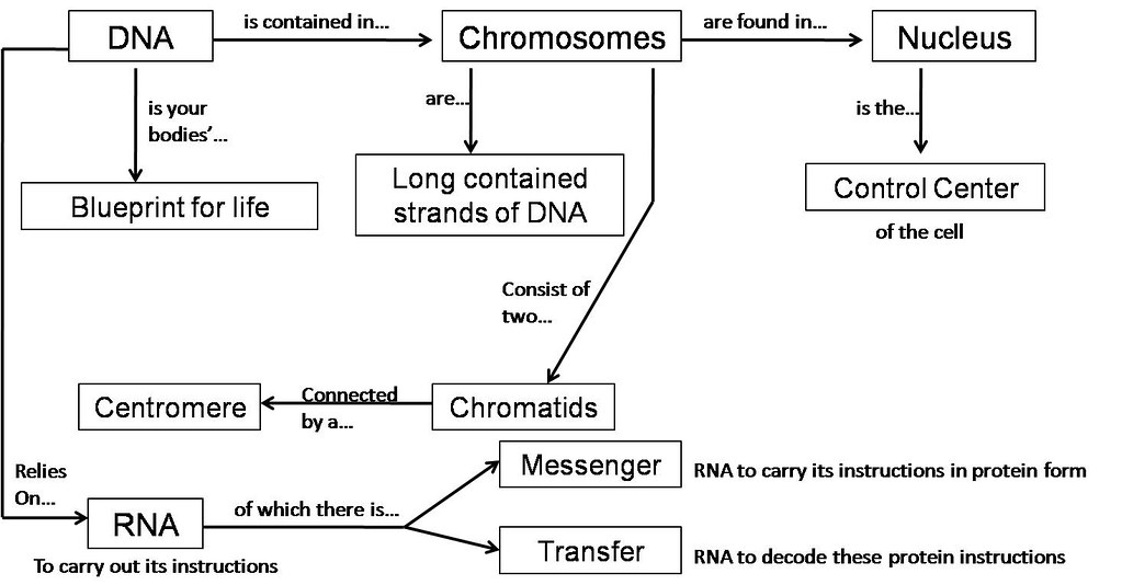 Concept map dna timothy yin flickr malvernweather Images