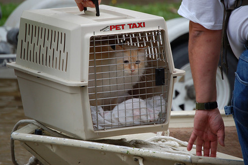 Rescued Cat | by U.S. Geological Survey