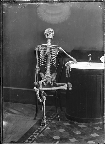 Portrait of an articulated skeleton on a bentwood chair | by Powerhouse Museum Collection