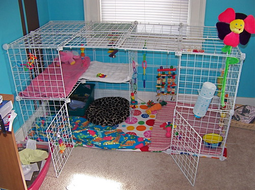 Flynn 39 s new nic cage flickr photo sharing for Easy diy rabbit cage budget