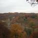 fall_trees_29