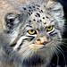 Grumpy Kitty...