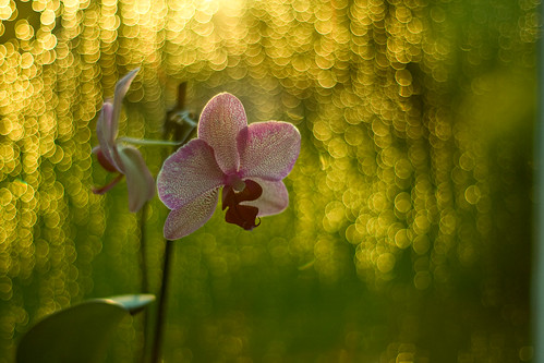 it's raining bokeh | by harold.lloyd