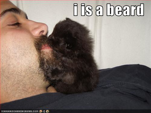 funny-pictures-little-kitten-is-big-beard ...