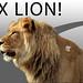 Lion OSX