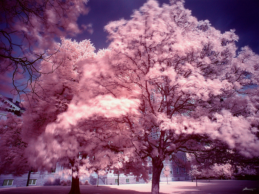 Pink My First Infrared Paul Bica Flickr