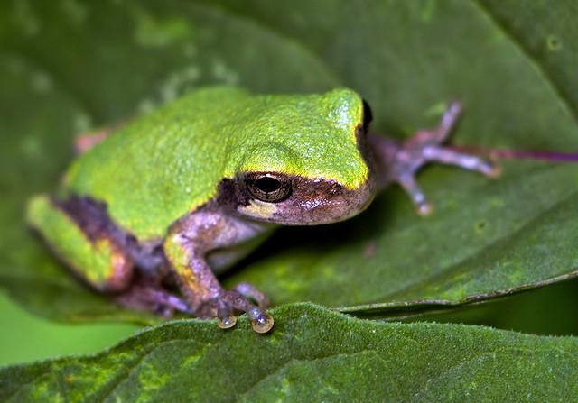 Frog Free Walking Tour Milan