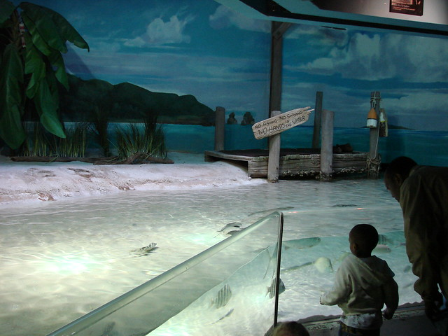 2008 03 16 Camden 024 New Jersey State Aquarium Flickr